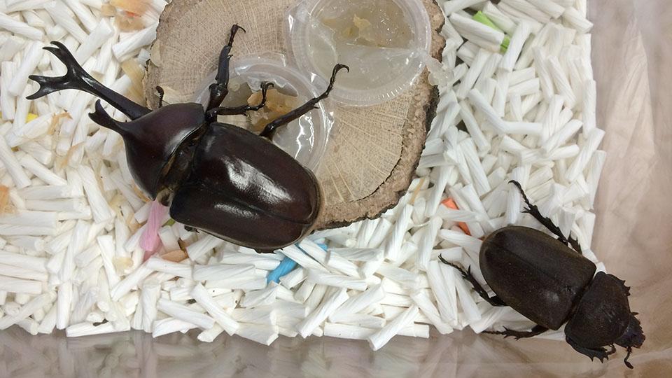 虫かごの紙砂とゼリー置場