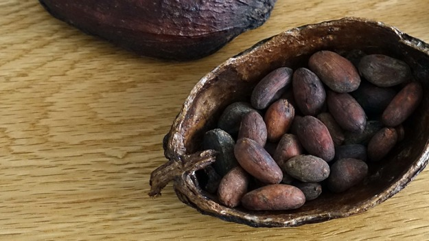 0_cacao-beans